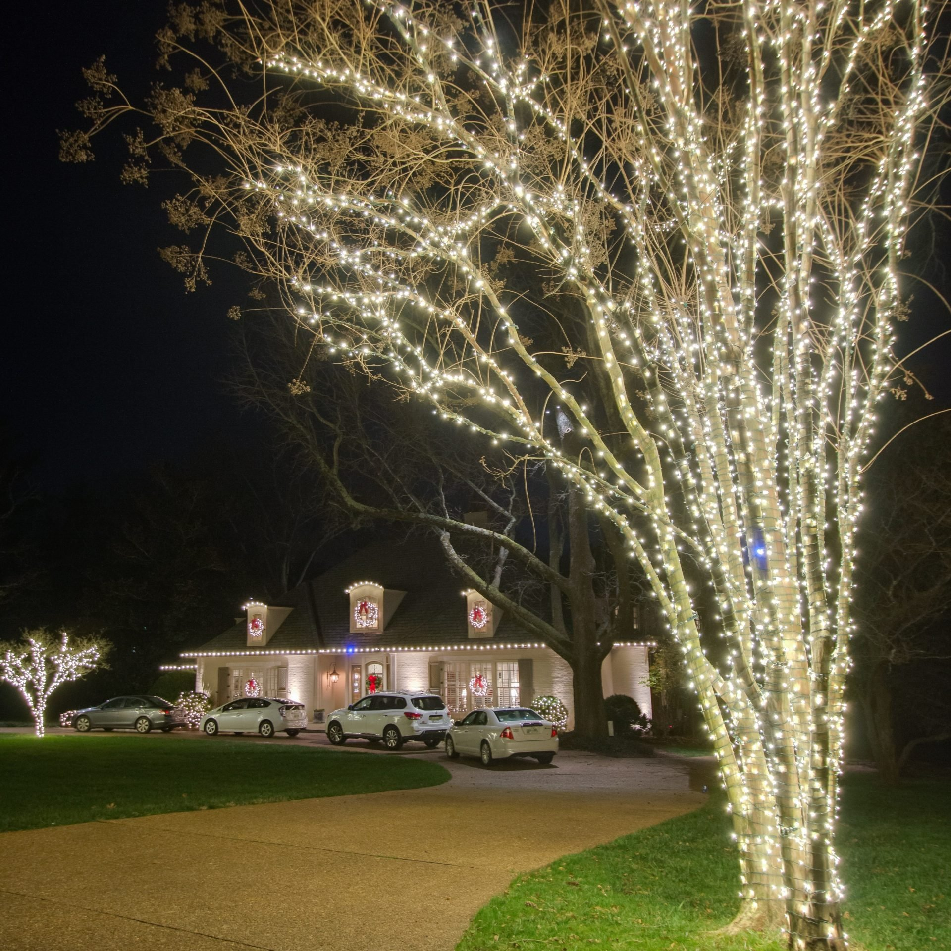 Illuminating Trees Outdoor Christmas Design | Veteran Car Donations