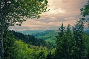 Nature in Great Smoky Mountains National Park | Veteran Car Donations